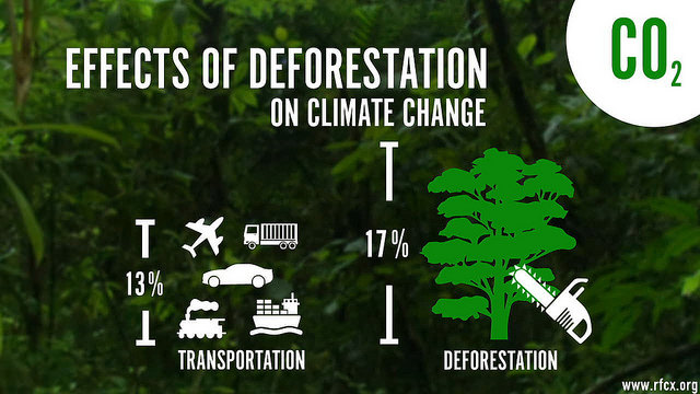 rainforestconnection_infographic